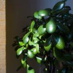 会社で放置されていた観葉植物をこっそりと世話していたら…